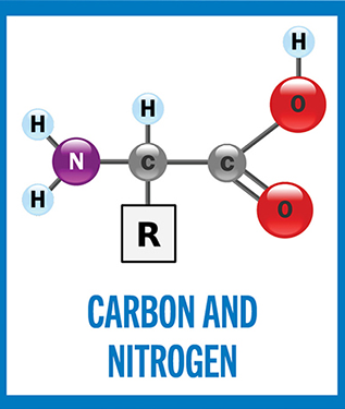 (Bio)chemical elements: Atomic Nos. 6 and 7
