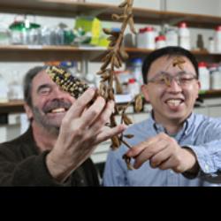 Damon Lisch and Jianxin Ma