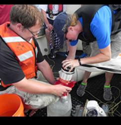 Sea Grant workers