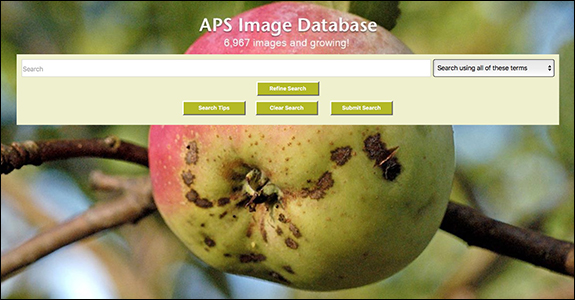 APS Image Database