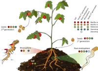 Phytobiomes Journal article on tomato seed endophytes downloaded nearly 2,000 times!