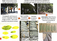 New Phytopathology study works with historically disenfranchised communities to combat sudden oak death.