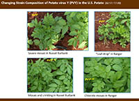 "Plant Management Network releases new ""Focus on Potato"" webcast on Potato virus Y."