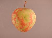 """Hidden Killer: Apple Scar Skin Viroid"" case study now available in APS Education Center."